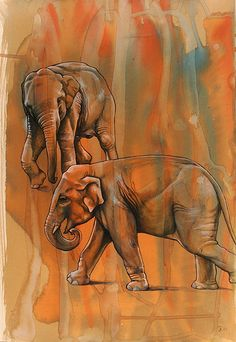 Elephants Backdrop Color interplay Elephant interplay background foreground middleground