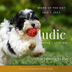 The #wordoftheday is ludic. #merriamwebster #dictionary #language