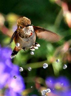 Humming Bird Bubbles!