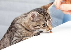 Mit unseren leckeren Rezepten wird … Just make cat treats yourself. Baking for the cat is child's play with our tasty recipes. White Kittens, Cats And Kittens, Kittens Cutest, Cute Cats, Animals And Pets, Cute Animals, Cat Tags, Norwegian Forest Cat, Sleepy Cat