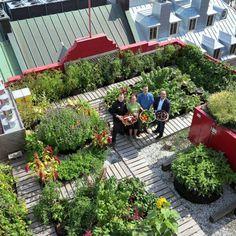 Agriculture urbaine sur le toit de l'Hôtel du Vieux-Québec, par Les Urbainculteurs. / Urban agriculture on the rooftop of Hôtel du Vieux-Québec, by Les Urbainculteurs.