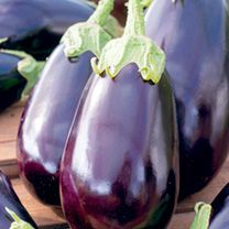 Aubergine Seeds - Black Beauty at Suttons Seeds Heating A Greenhouse, Greenhouse Growing, When To Plant Vegetables, All Vegetables, Purple Flowering Plants, Sutton Seeds, Growing Lettuce, Growing Veggies, Lettuce Seeds