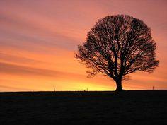 Featured Art - Arora Sunrise by Joseph Doyle Digital Art Photography, Morning Sky, Sunset Art, Closer To Nature, Art For Sale, Fine Art America, Joseph, Framed Prints, Artwork