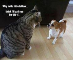 It might not be fair but this is definitely the way many cats think if they have to deal with a dog in their house!