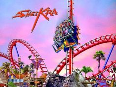 Sheikra Roller Ccoaster