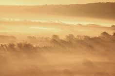 Purbeck Gold | por George-Edwards