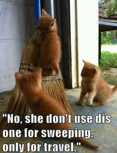 Ver pactar con el gato online dating