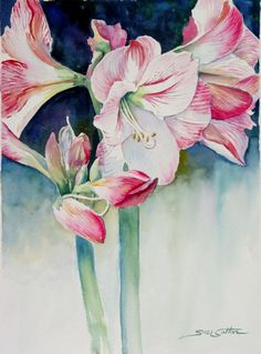 wfAmaryllis2.jpg (372×504)  by Sue Lynn Cotton