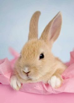 Aren't I soft and lovely - #Easter #bunny