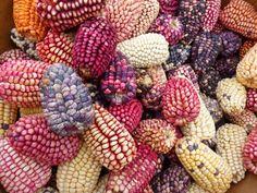 corn-43312_640