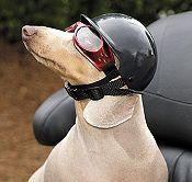 Dog Motorcycle Biker Helmet