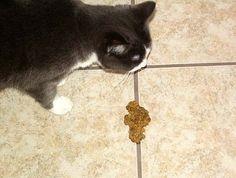 Mengatasi Kucing Muntah: Kucing Muntah Makanannya