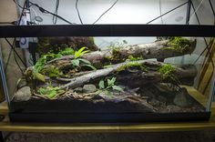 40 Gallon Epipedobates tricolor 'Cielito' (WIKIRI) Biotope | by Shaun T Johnson