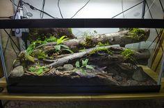 40 Gallon Epipedobates tricolor 'Cielito' (WIKIRI) Biotope | by Shaun T Johnson