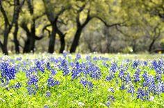 Enjoy Spring on the Bluebonnet Trails | Murski Homestead | Brenham, TX