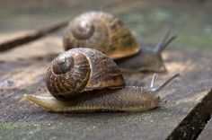 Two Snails - Jigsaw Puzzles Online at JSPuzzles