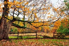 Fall season, i dont get to meet you this year... But i wish to see you next year....