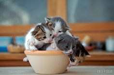 One More Cup of Kitten