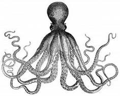 Vintage engraved illustration: Octopus