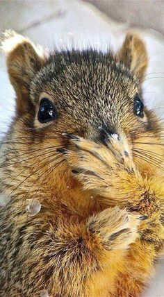 Oops! That wasn't a nut! Sorry.