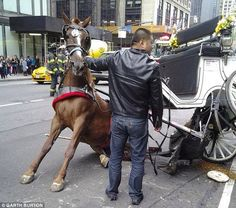 I Care About Animals's photo: Another horse hurt today on the streets of NYC. On the streets of one of the busiest cities in the world they use live animals to entertain people! Go to this facebook page to be part of the solution: https://www.facebook.com/stophorseabuse