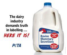 "When Aussie dairy farmers want to stop plant-based milks being labelled ""milk""... ;-) #vegan #vegetarian #glutenfree #food #GoVegan #organic #healthy #RAW #recipe #health #whatveganseat"
