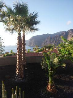 #Palmen und die Los Gigantes im Hintergrund an einem perfekten sonnigen Tag auf #Teneriffa. #meer
