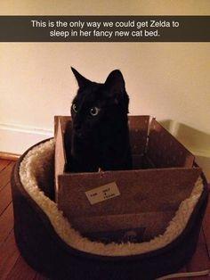 Zonder doos wou Zelda niet in haar nieuwe mand slapen.
