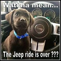 for jeep compass, or used jeeps for sale, Click VISIT link for more details Jeep Meme, Jeep Humor, Jeep Funny, Funny Dogs, Jeep Tj, Jeep Truck, My Dream Car, Dream Cars, Jeep Quotes