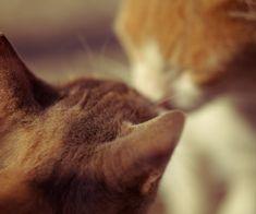 DIY – hæklet baby trøje   Tøse-streger Cats, Animals, Gatos, Animales, Animaux, Animal, Cat, Animais, Kitty