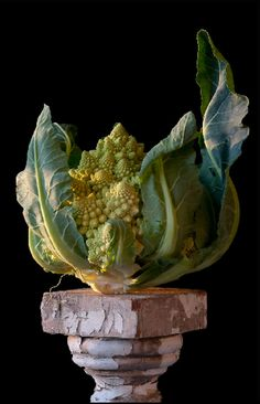 Lynn Karlin: Raw Art - The Pedestal Series, Romanesco cauliflower