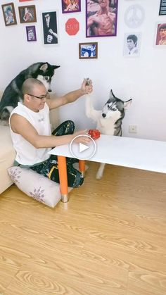 Cute Cat Gif, Cute Funny Animals, Silly Dogs, Funny Dogs, Funny Animal Videos, Videos Funny, Pet Paws, Alternative Movie Posters, Love Pet