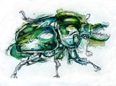 Two Beetles - Finch Fight: Drawing & Illustration