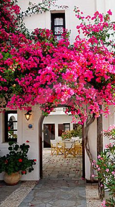 A pink flowering vine ( Bougainvillea ) welcomes visitors to this Spanish style home. Love how it curves over the archway, leading you to the courtyard. Beautiful Gardens, Beautiful Flowers, Beautiful Places, Nice Flower, Hot Pink Flowers, Colorful Roses, Beautiful Beautiful, Dream Garden, Home And Garden