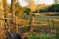 AFTERNOON ORANGE GLOW ON THE OLD BROKEN FENCE by Texas artist Pamela Smale Williams, ARTography by Pamela, and Image Wizards Photography copyrighted.  Available at http://pamela-smale-williams.artistwebsites.com Rural country roads of the Texas Piney Woods