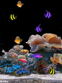 Beauty under the sea. Images Gif, Gif Pictures, Pretty Pictures, Bing Images, Fish Wallpaper, Wallpaper Keren, Photo Wallpaper, Beneath The Sea, Under The Sea