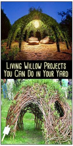 Backyard Garden Design, Backyard Landscaping, Terrace Garden, Herb Garden, Backyard Trees, Backyard Kitchen, Garden Beds, Unique Gardens, Amazing Gardens