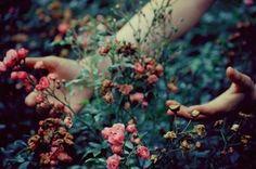 Ver como florecen flores es como educar a un niño y ver como también ellos florecen...