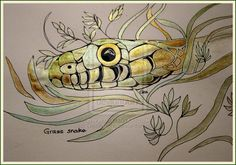 GRASS SNAKE by GeaAusten.deviantart.com on @deviantART