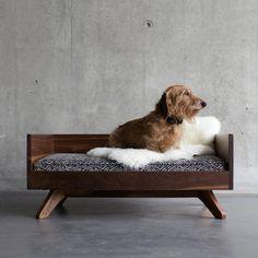 Winston is so handsome! #Dogbed #dog #doglover #cute #love #doglover #dogstagram #dogobsessed #dogoftheday #dogloversite #dogsofinstagram #doglover #petpics #petparent #petstagram #design #interiordesign #toronto #kingwest #libertyvillage #dachshund #minituredachshund #doxin #dogsareagirlsbestfriend #love #cute #puppy #pupandkit #instagood #instagramdogs #design #homedecor #homedesign #furniture