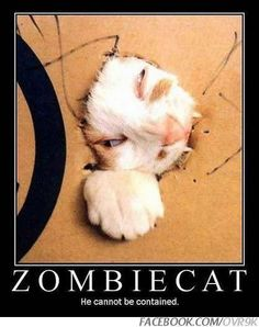 Zombie Cat? more likely schrodinger's and he clearly doesn't like being part of a theory