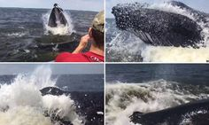 'It nearly capsized us!' Shocking moment a humpback whale lurches from the ocean just INCHES from a boat and snaps its jaws  -  lj