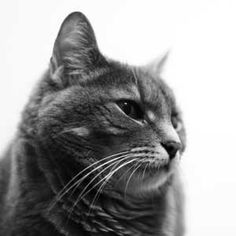 Common Cat Behaviours A deep stare accompanied by a purr, gentle kneading and rubs against our legs are all great. However, rejecting a clean litterbox and streaking (leaving faeces stains) through the house are far from OK. Cat Behavior, Litter Box, Neko, Cats, Animals, Comedy, Stains, Training, Exercise