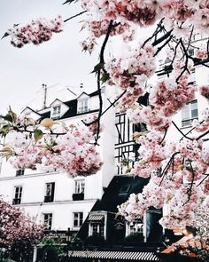 Image about beautiful in Travel ♡ by Rishika. Pretty Flowers, Pretty In Pink, Pink Flowers, Fitz Huxley, Spring Aesthetic, Adventure Is Out There, Narnia, Aesthetic Wallpapers, Photos