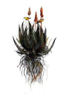 Sunbirds in the Aloe Limited Edition Art Print by katcameron, $12.00