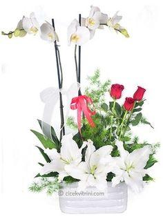 Orkide Ve Güller çiçek http://www.cicekvitrini.com/cicekler/istanbul-cicek-siparisi