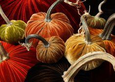close group velvet pumpkins hot skwash may.jpg