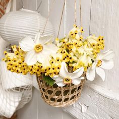 Huussikukat on back! ♥️ @oravankesapesa #oravankesäpesä #huussikukat  #wckukka  #pursueprettythings  #narsissi #narcissus #narcissuspoeticus #runoilijanarsissi #daffodil #jalokiurunkannus #corydalisnobilis #frommygarden #springflowerbouquet #trädgårdslycka #allthingsbotanical #gardenlifestyle #allthingsfloral Spring Flower Bouquet, Daffodils, Planter Pots, Floral, Pretty, Instagram, Flowers, Flower