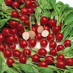 Box3_Radish Cherry Belle
