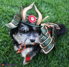 Tam: Rosco the Last Dog Samurai is awaiting an epic battle! He is a renowned warrior of 10 years and is constantly in battle with stinky socks, his own tail and...